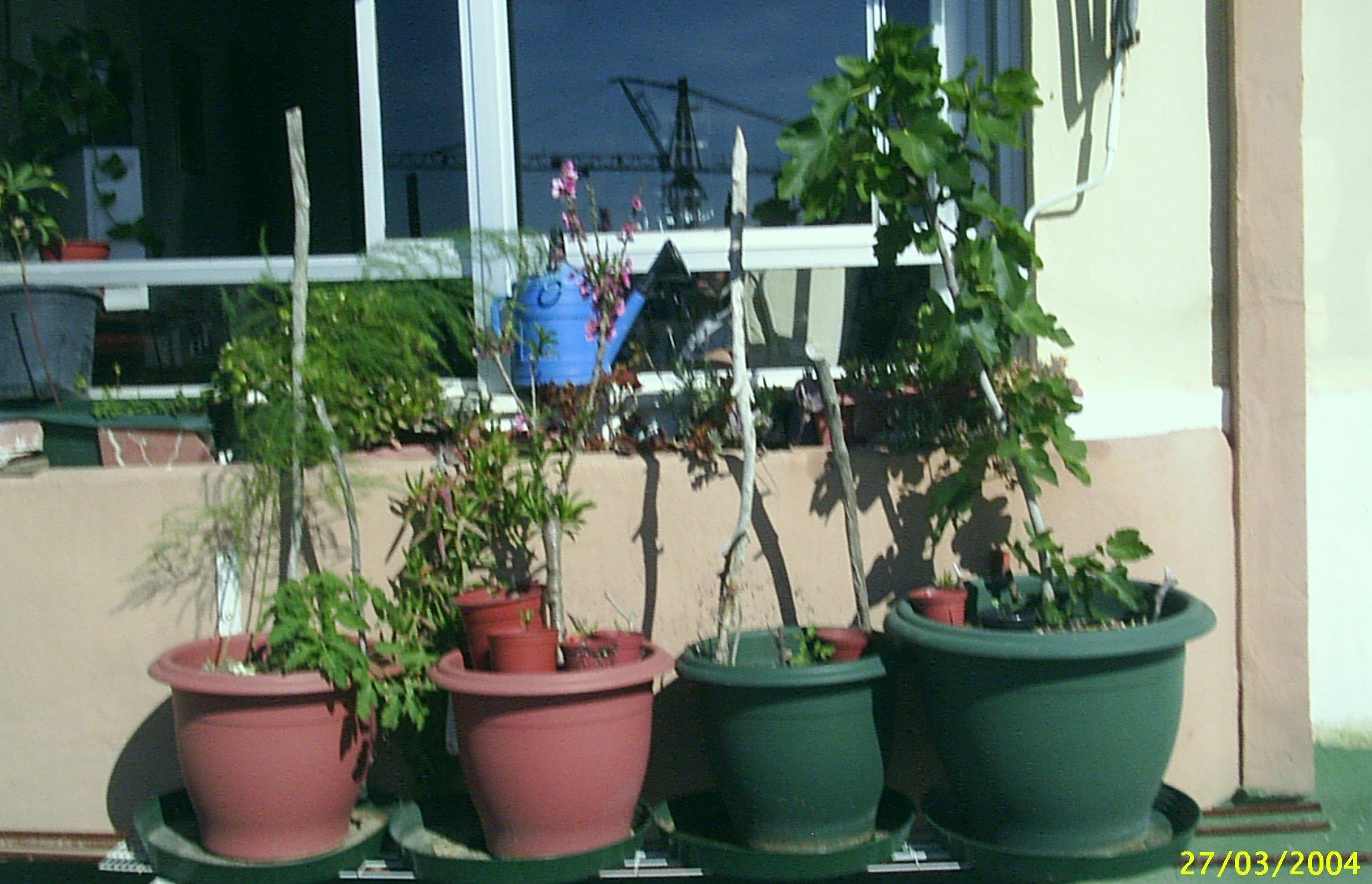 Mi peque�o huerto urbano: Esp�rragos, tomates, frutales...
