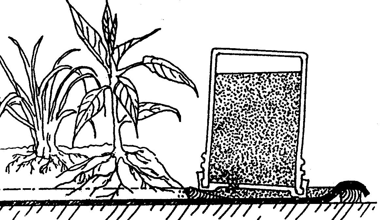 Huerto con una balsa de agua en el fondo, con control de profundidad: shallow pool garden (dibujo de ECHO)